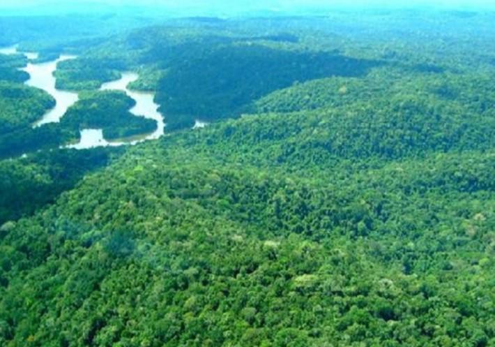A amazô